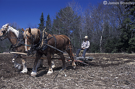 Old fashioned horse powered tiller with farmer