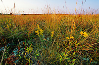 Tallgrass prairie at Bluestem Prairie Scientific and Natural Area, East of Moorehead, Minnesota, AGPix_0086 .