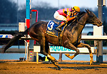 """February 1st, 2020: Max Player [3] is ridden to victory by Dylan Davis in the G3 Withers Stakes by three lengths.   """"Player"""" earned 10 points toward the KY Derby and is trained by Linda Rice. The race was held at Aqueduct Race Track in Ozone New York. Heary/Eclipse Sportswire/CSM"""
