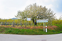 A tree in flower with some vines and road signs pointing to the chapel on top of the Hermitage hill. Vineyards on the limit between Hermitage and Crozes Hermitage. Tain l'Hermitage, Drome, Drôme, France, Europe
