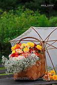 Carl, FLOWERS, photos, SWLA12034,#f# Blumen, Natur, flores, naturaleza