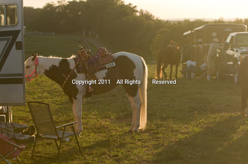 Johnsville, MD: J Bar W Ranch -- Emily Donathan's horse Chloe in foreground.