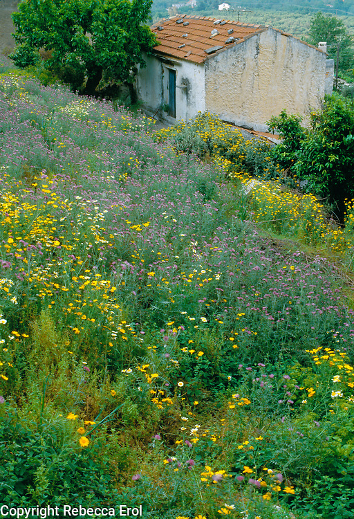 Wildflower meadow behind a village house in Maheri, Crete, May 2005