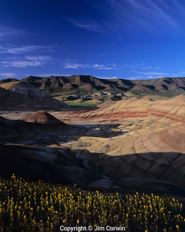 John Day Fossil Beds wild yellow flowers along hillside with sedimentary strata Painted Hills John Day Fossil Beds National Monument near Prineville Central Oregon State USA