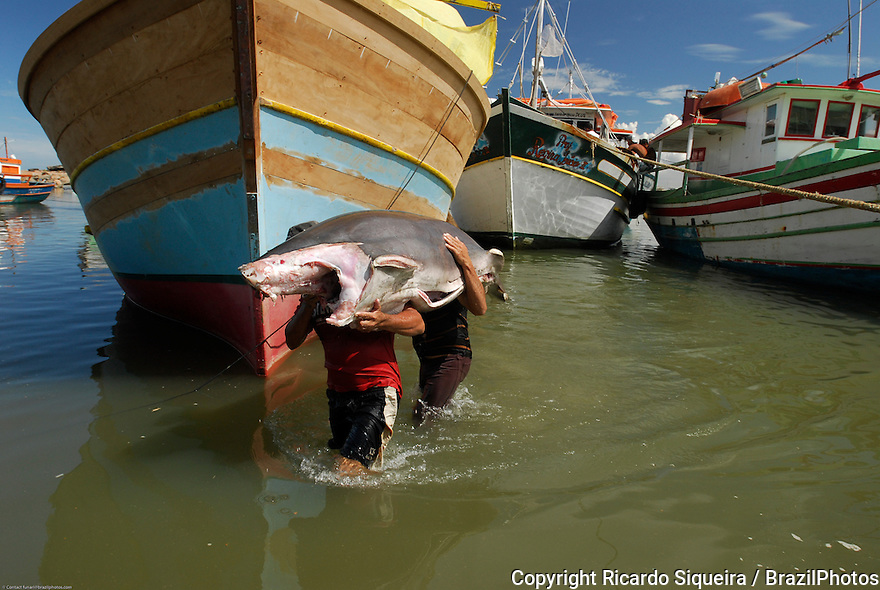 Commercial fishing in Brazil, two fishermen carry a shark, Itapemirim city, Espirito Santo State, Brazil.