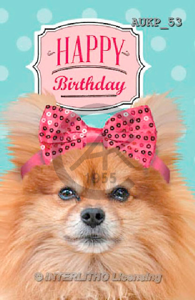 Samantha, ANIMALS, REALISTISCHE TIERE, ANIMALES REALISTICOS, funny, photos+++++Party Pomeranian Master,AUKP53,#a#