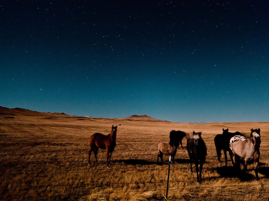 A group of horses gather underneath a sky full of stars, lit by the light of the full moon in Central Montana.