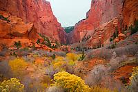 """KOLUB KOLORS""<br /> <br /> Beautiful desert color at Kolub near Zion National Park."