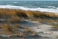 Texelse duinen in de winter