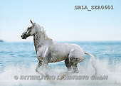 Bob, ANIMALS, collage, horses, photos(GBLASEA0601,#A#) Pferde, caballos