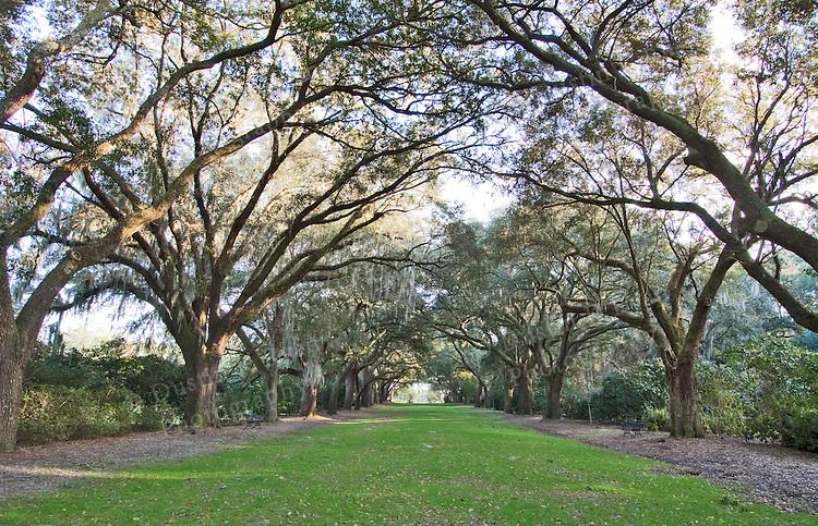 Charles Towne Landing Charleston South Carolina live, oak, trees, live oak trees, sunset, southern, south carolina