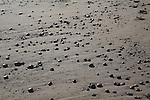 Pebbles on Dunwich beach, North Sea coast, Suffolk, East Anglia, England