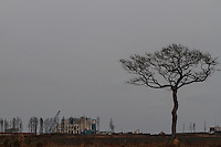 Tsunami damaged buildings and dead trees inside the Fukushima exclusion zone, Namie, Fukushima, Japan. Wednesday March 9th 2016. The Great East Japan Earthquake on March 11th 2011 was followed by a massive tsunami that levelled much of the Tohoku coast in north east Japan, killing around 18,000 people and causing meltdowns and explosions at the Fukushima Daiichi nuclear power station leading to the contamination and evacuation of a 20 kilometre exclusion zone around the plant.