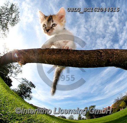 REALISTIC ANIMALS, REALISTISCHE TIERE, ANIMALES REALISTICOS, cats, paintings+++++,USLGSC162044515,#A#, EVERYDAY ,photos,fotos,pounce,cat,cats,kitten,kittens,Seth