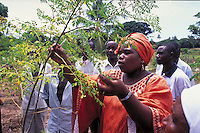 Extention agent introduces to the population trees of Moringa oleifera to promote their plantation