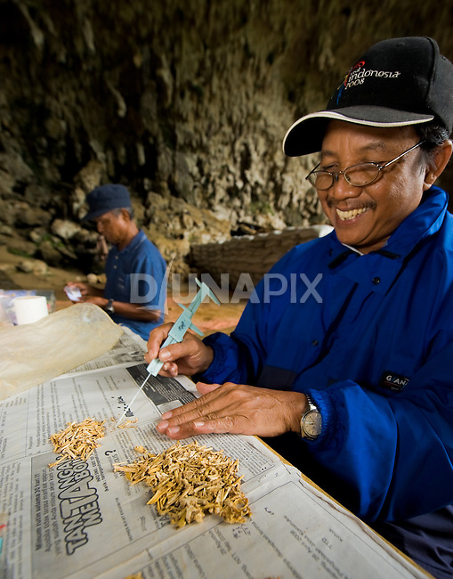 """ARKENAS researcher Jatmiko sorts through piles of faunal remains recovered by wet seiving sediments dug out of Liang Bua cave, discovery site of the Flores """"hobbit"""", Homo floresiensis."""