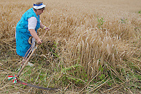 Participant competes during a traditional harvest festival in Opalyi (some 280 kilometers East of capital city Budapest), Hungary on July 13, 2013. ATTILA VOLGYI