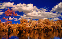 faux color infrared of Merchant's Millpond landscape reflection