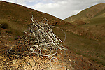 Trapping wire used by poachers collected by Panthera biologists, Pikertyk, Tien Shan Mountains, eastern Kyrgyzstan