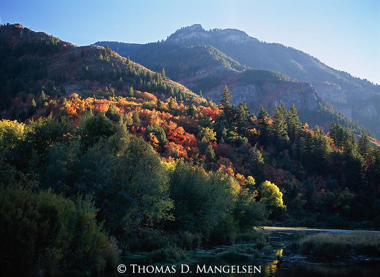 Evening light illuminates the fall color adorning trees in Logan Canyon, Utah.