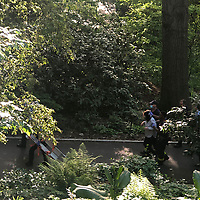NEW YORK, USA - MAY 27: First responders help yhree people after get injured after a branch falls on them in Riverside Community Park in Upper West Side Manhattan on May 27,2020 in New York, USA. (Photo by Joana Toro/VIEWpress)