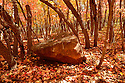 As the maples and oaks intermingle their trunks and leaves this stone rests peacefully.