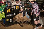 SEBRA - Raphine, VA - 1.11.2014 - Mutton Bustin'