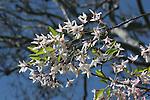 Spring bloom in Hayward