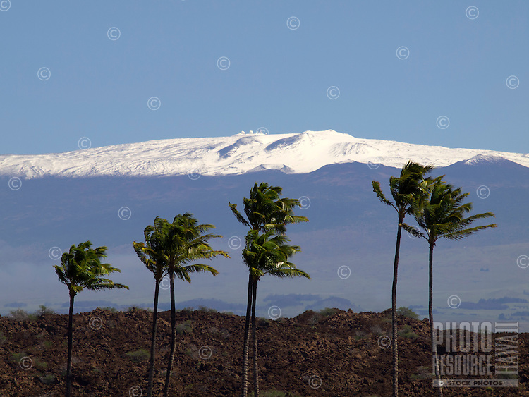 Snow-covered Mauna Kea in the distance, as seen from the entrance to Mauna Lani Resort, Big Island.