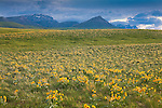 A wildflower meadow with the Rocky Mountain Front