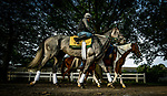 JUNE 06: Tacitus walks back to the barn after completing preparations for The Belmont Stakes at Belmont Park in Elmont, New York on June 06, 2019. Evers/Eclipse Sportswire/CSM