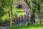 Peloton at Loorberg, Amstel Gold Race, 20th April 2014, Photo by Thomas van Bracht / www.pelotonphotos.com