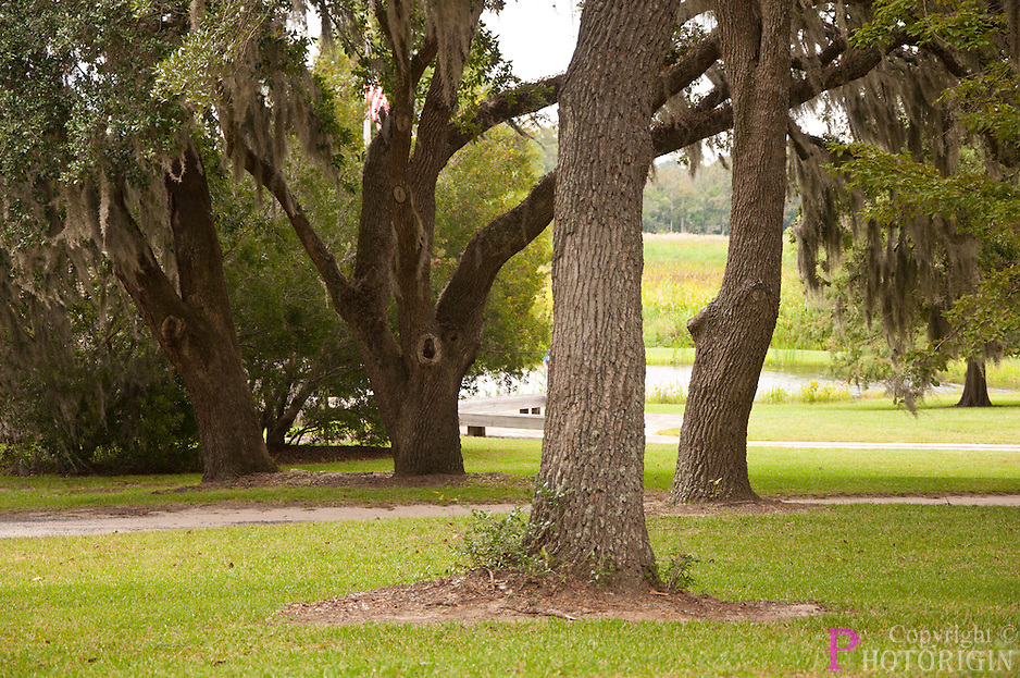 Beautiful Trees of Brookgreen gardens, a national historic landmark. Ever green garden all through the year. A view of the garden on a summer season.