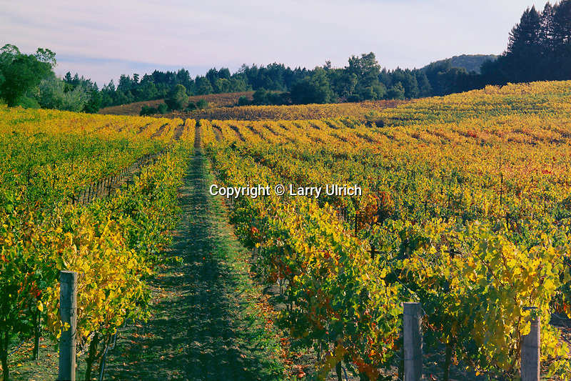 Vineyards from<br />