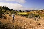 San Francisco Garter Snake (Thamnophis sirtalis tetrataenia) researcher Michelle Thompson walking through snake habitat to check traps, Pescadero, California