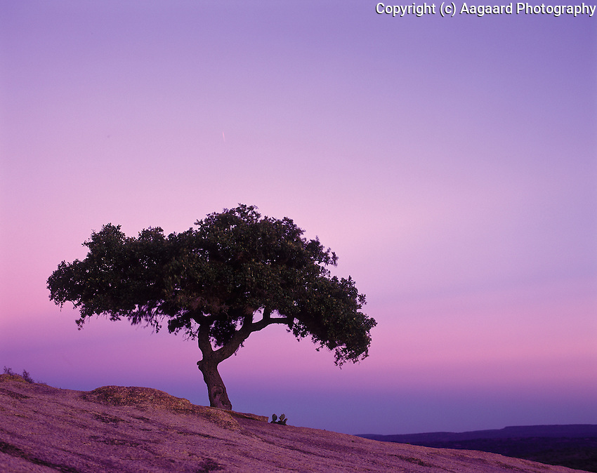 Enchanted Rock sky after sunset.  This live oak grows high up on the rock, surviving on the dirt deposited in a crack through the eons.  <br /> <br /> Mamiya RB67 Pro SD, 180mm lens, Fuji Provia film