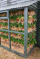 Vegetable & Fruit Trellis Vertical Growing Supports Photos