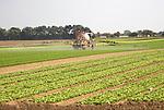 Sprayer spraying lettuce crop, Bawdsey, Suffolk, England, UK