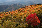 Autumn maple and ridges, Blue Ridge Parkway