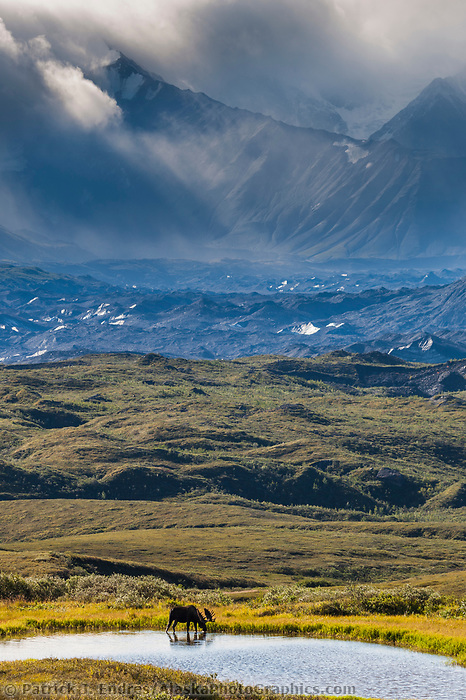 Alaska range mountains and the Muldrow glacier moraine in the distance, Denali National Park, Interior, Alaska.