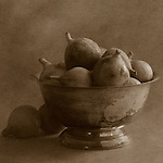 Fine art still life sepia toned photography