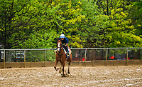 BALTIMORE , MD - MAY 16:  Good Magic gallops over a sloppy track in preparation for the Preakness Stakes at Pimlico Racecourse on May 16, 2018 in Baltimore, Maryland. (Photo by Alex Evers/Eclipse Sportswire/Getty Images)