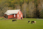 Barn and horses in pasture.