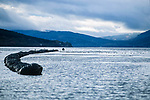 Rope grown mussels, Loch Fyne West Coast of Scotland