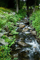 Fast flowing stream under over hanging trees in Deep Cove,Vancouver, British Columbia, Canada.
