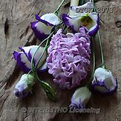 Gisela, FLOWERS, BLUMEN, FLORES, photos+++++,DTGK2073,#f#