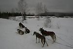 Dog sledding with Aventure Inukshuk