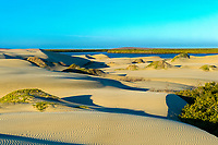 sand dunes and mangroves of Isla Magdalena, Baja California, Mexico