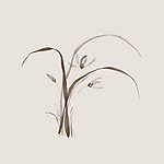 Wild orchid flowers, delicate refined floral design based on rice paper of Japanese Zen ink painting artwork. Brown bamboo on light beige ivory background.