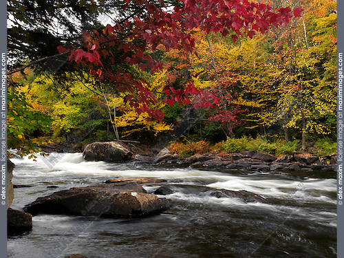 Oxtongue Rapids. Beautiful fall nature scenery. Algonquin, Muskoka, Ontario, Canada.